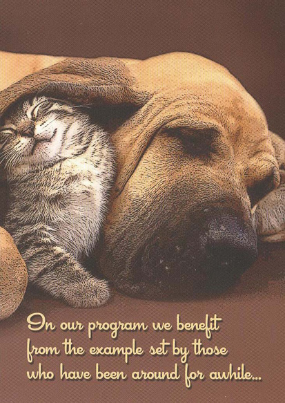 Kitten & Hound Card