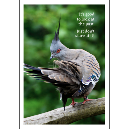 Look at the Past - Pigeon